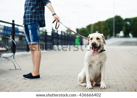 a teenager and a dog, friendship, young guy and a white labrador on the river bank #436666402