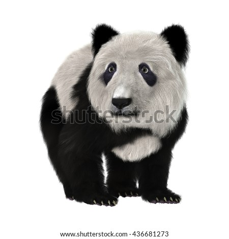 3D rendering of a panda bear cub isolated on white background #436681273