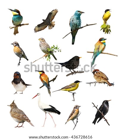 Set of photographs of birds isolated on white background, texture #436728616