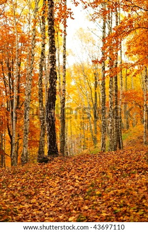 forest in autumn #43697110