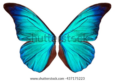 Beautiful blue butterfly wings isolated on white background. Royalty-Free Stock Photo #437175223