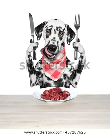 Dog is going to eat meat -- isolated on white #437289625