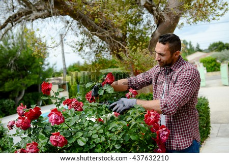handsome young man gardener landscaping and taking care of beautiful roses #437632210