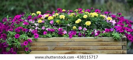 flowers #438115717