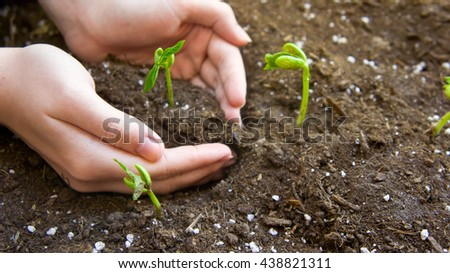 the female young hand plants germinated haricot to the earth with fertilizers, small green leaves, two hands #438821311