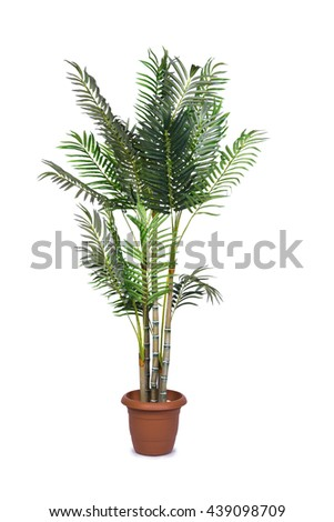Areca palm isolated on the white background #439098709