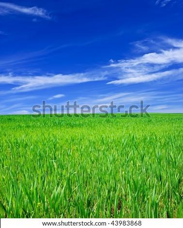 green meadow #43983868