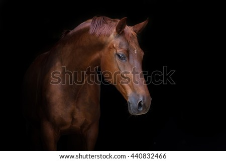 Beautiful red horse portrait on black background #440832466