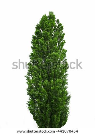 A Single Tree Standing Alone #441078454