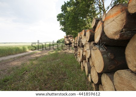 Cutted trees with view at the road. #441859612