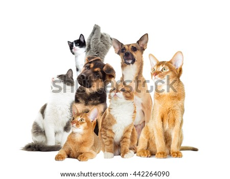 Pets are looking to the side #442264090