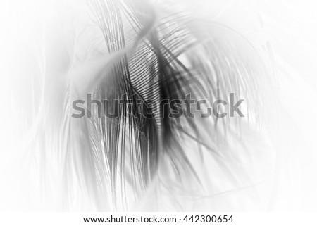 blur feather wool dark black background #442300654
