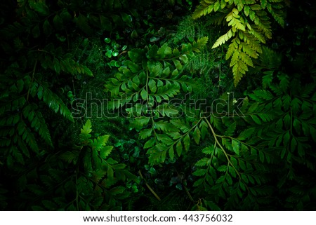 Low key of leaf with soft bright sunlight dark tone for background #443756032