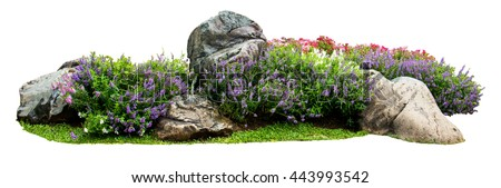 Natural flower and stone in garden isolated on white background. Garden flower part #443993542