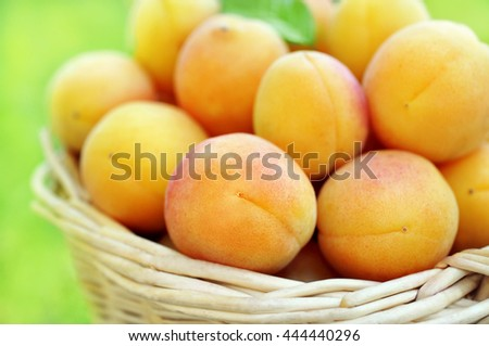 Basket of fresh ripe sweet apricots, selective focus #444440296