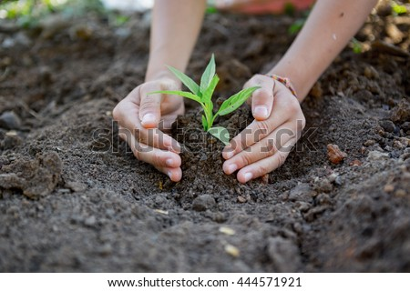 two hands children planting a tree #444571921