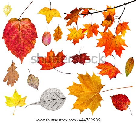 set of various autumn leaves isolated on white background #444762985