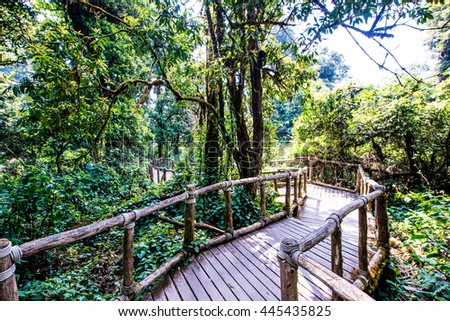 Nature Trail in Doi Inthanon National Park, Thailand #445435825