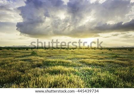 grassland, a prairie, a pampas, a pasture Royalty-Free Stock Photo #445439734