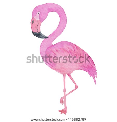 Flamingo Pink Bird Exotic Watercolor Hand-painted Illustration Isolated