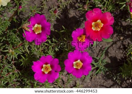 Spring flower close up #446299453