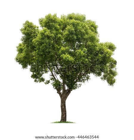 Isolated tree on white background Royalty-Free Stock Photo #446463544