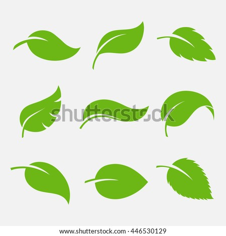 Leaves icon vector set isolated on white background. Various shapes of green leaves of trees and plants. Elements for eco and bio logos.  Royalty-Free Stock Photo #446530129