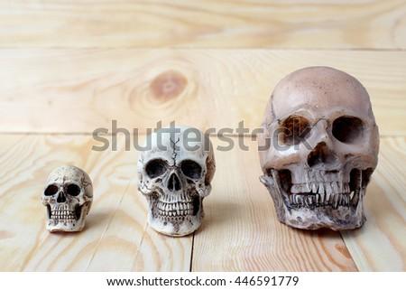 Human skull on pine wood background ; still-life #446591779