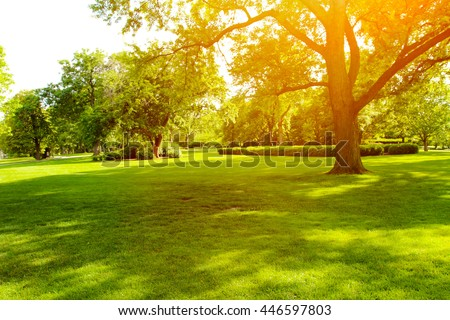 Beautiful summer landscape with trees and green grass #446597803