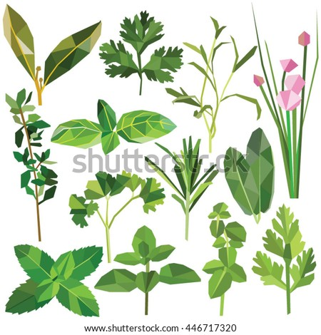 Herbs set colorful low poly botanical designs isolated on white background. Vector edible food illustration. Collection of medicinal plants in modern style. Organic healing wild flowers. #446717320