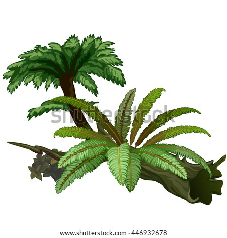 Exotic trees and fern are isolated on white background. Wildlife of the tropical jungle. Vector illustration. #446932678