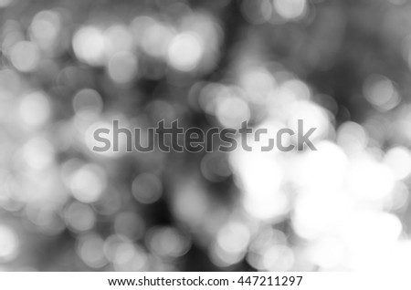 Gray black white bokeh out of focus background from nature forest #447211297