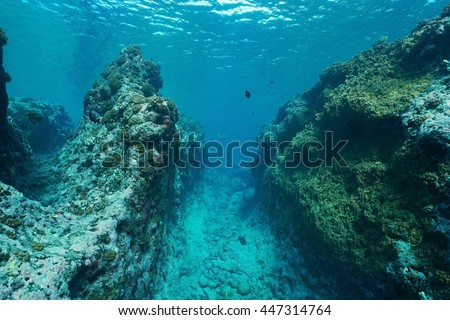 Underwater landscape on the outer reef carved by the swell, Huahine island, Pacific ocean, French Polynesia #447314764