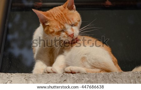 Bottom view of cute ginger cat licking herself on the window sill #447686638