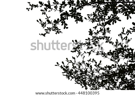 Black Leaves Tree in White Background Isolated Outdoor Plant Silhouette Branch Pattern Shape Art Paper Decoration