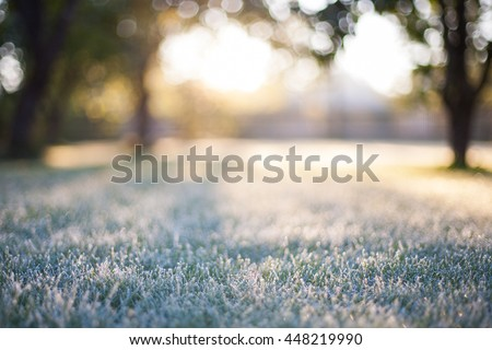 Frosted grass on a blurry bokeh sunrise backdrop Royalty-Free Stock Photo #448219990