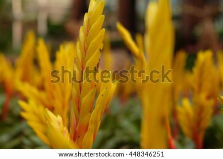 yellow flower  #448346251