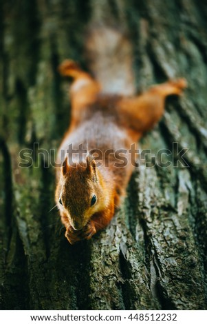 squirrel eating a nut on a tree #448512232