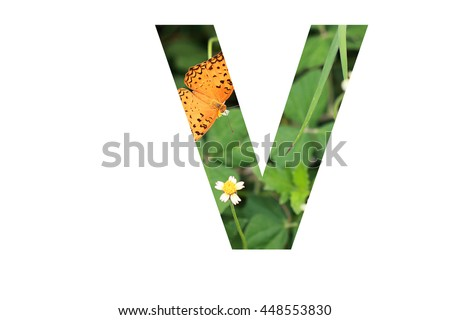 "The letter ""V"" with butterfly background inside #448553830"