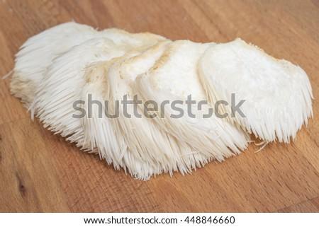 Whole lion's mane / bearded tooth / pom pom / hedgehog mushroom  Royalty-Free Stock Photo #448846660