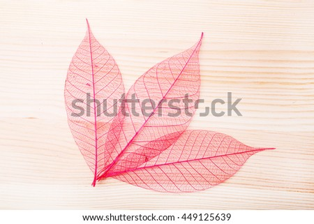 Leaves over wooden background.With copy space #449125639