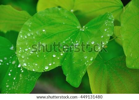 Dew on leaves #449131480