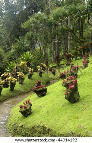 France, Martinique, garden of Balata #44914192
