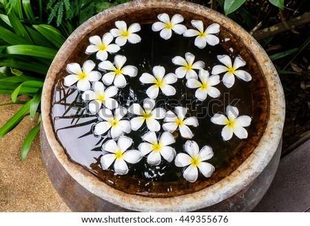 White Plumeria flower on  water in the jar. #449355676