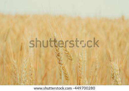 Harvest season #449700280