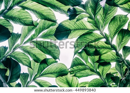 Green leaf pattern on the surface