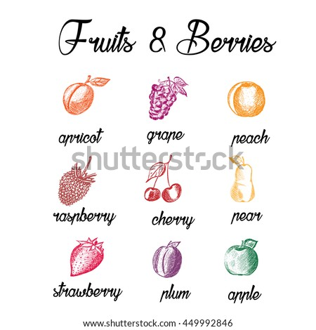Fruits and berries. Eco food. Hand drawn apricot, grape, reach, raspberry, cherry, pear, strawberry, plum, apple. Sketch style fruits on white background. Vector illustration #449992846