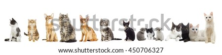 cats group looking