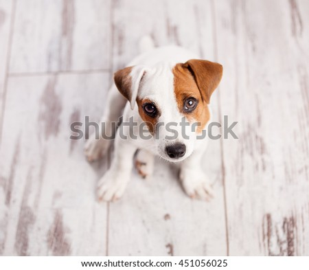 Puppy at home. Dog at white #451056025