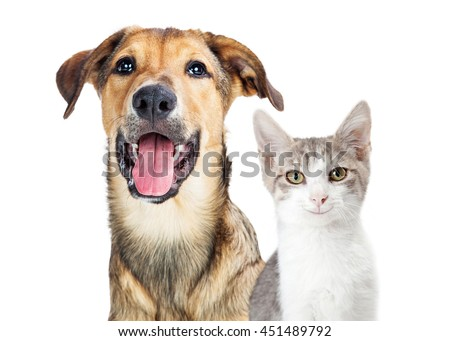 Portrait of cute and happy puppy and kitten with smiles on faces #451489792